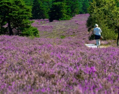 Hiking in the heather